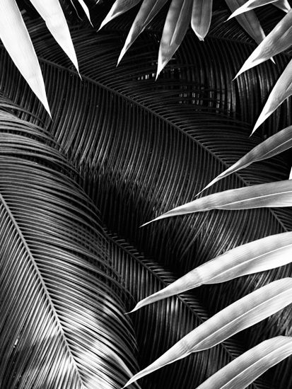 B, ferns, foliage, gorgeous light, texture and composition. #photography Photo by Sacha Maric