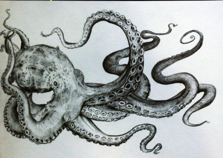 Tintenfischtentakeln zeichnen – Búsqueda de Google | Tintenfisch-Tätowierungen…
