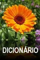 dicionário de alemão