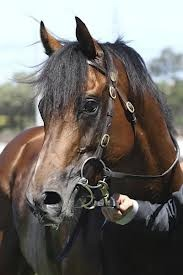 green moon - Melbourne cup winner