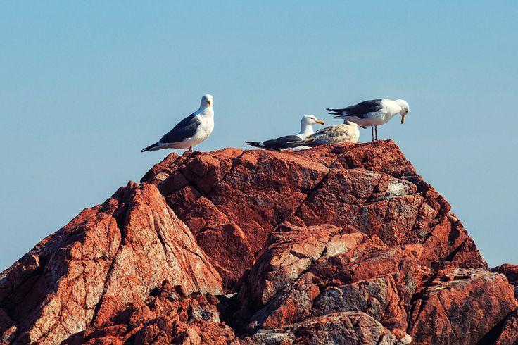 Острова Верховского архипелага императрицы Евгении в Приморье. Здесь гнездятся журавль японский и даурский, цапля желтоклювая, черный гриф и японский бекас, орлан-белохвост и орлан белоплечий, беркут и сокол-сапсан.