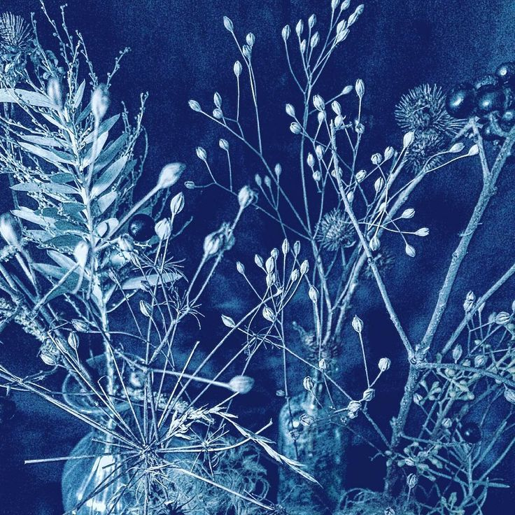 Inky #underthefloralspell #gardengathered #blossomanddill #ink #penandink #japanese #japaneseart #stilllife #stilllifephotography #study #sketch #botanical #botany #horticulture #batik #resist #flowerstagram #flowersofinstagram #dsfloral #clementinedaily #cotswolds #cotswoldflorist #floralstyling