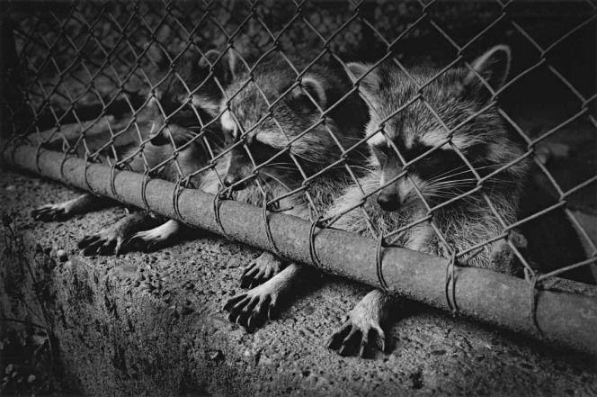 Vanden Eeckhoudt, un photographe face au regard des animaux | BLOG L214