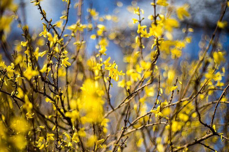 Blüten bei Sonnenschein
