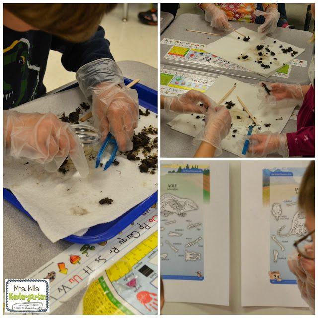 Owl Kindergarten Lesson Plans