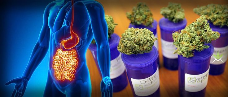 Cannabis Is Curing Stomach And Bowel Diseases Considered Incurable By Modern Medicine via @greenrushdaily