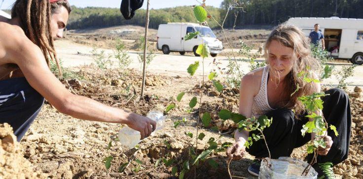 Mercredi 29 octobre, des opposants au barrage de Sivens plantent un arbre près de l'endroit où est mort Rémi Fraisse. (REMY GABALDA / AFP)