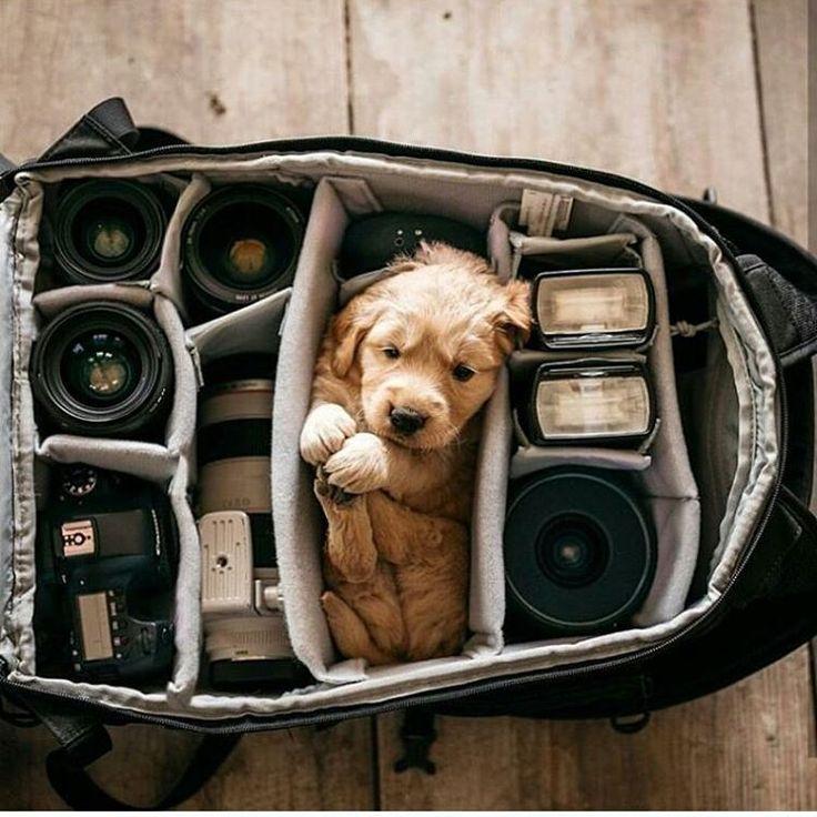Best 25+ Camera bags ideas on Pinterest   Camera backpack, Camera ...