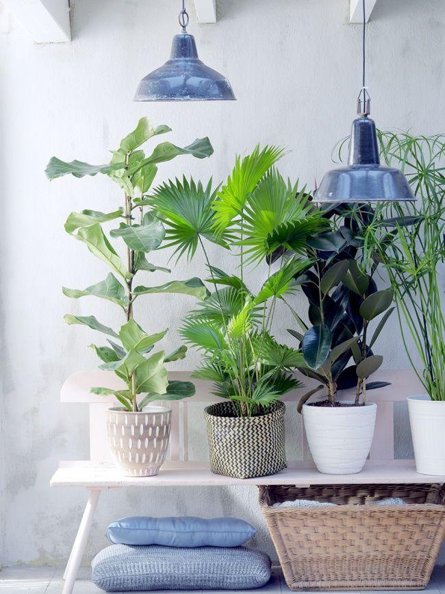 """Zimmerpflanzen in allen Formen und Farben in """"normaler"""" Größe sind als dekoratives Element sehr beliebt in den eigenen vier Wänden. Doch wie wäre es mal mit der übergroßen Variante?"""
