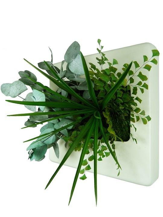 17 meilleures id es propos de tableau v g tal stabilis sur pinterest tableau vegetal mur - Mur vegetal exterieur sans entretien ...