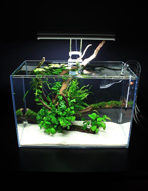 Jesse's Mini-L Anubias Adventure - The Planted Tank Forum