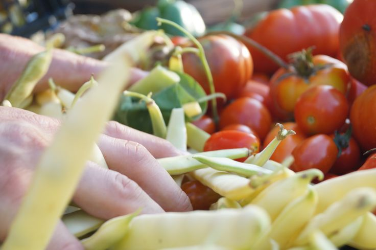 Beans, tomatoes, peppers and much more...
