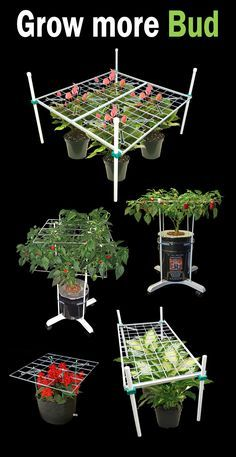 Plant training techniques can substantially improve yield while dramatically reducing grow space requirements and lighting needs.