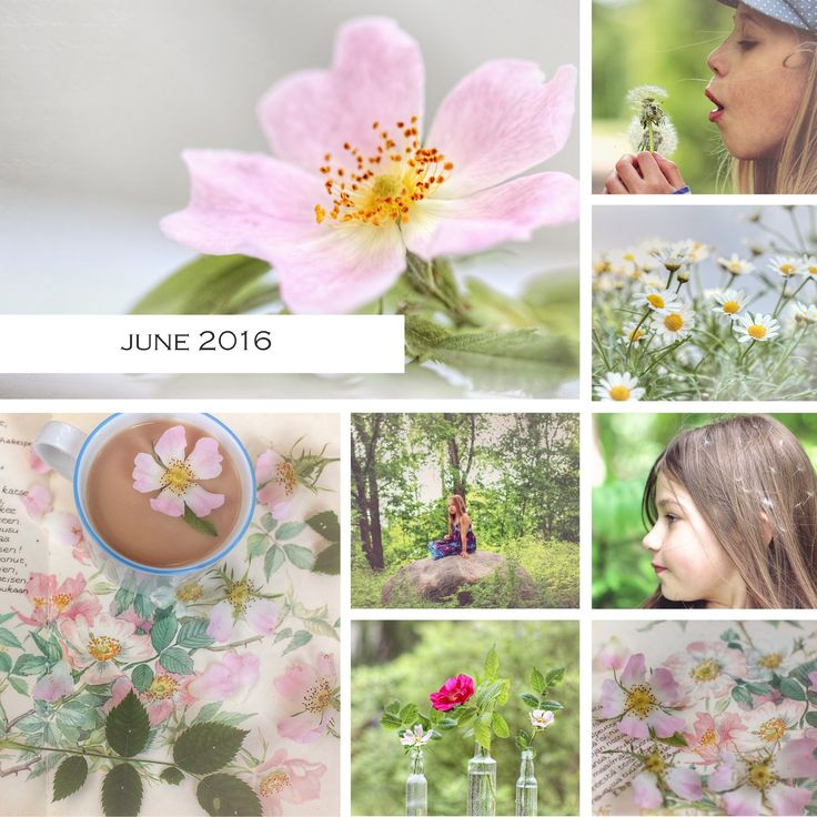 Mona's Picturesque: A month in photos {June 2016}