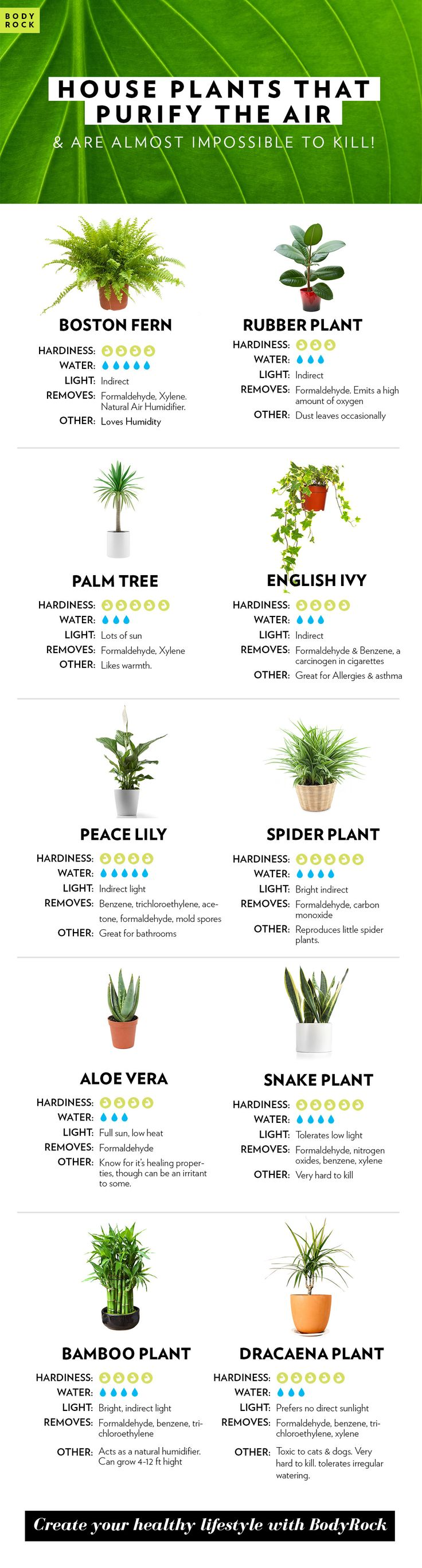 Keep you home feeling Fresh with these air purifying House Plants. Create your healthy life with BodyRock.
