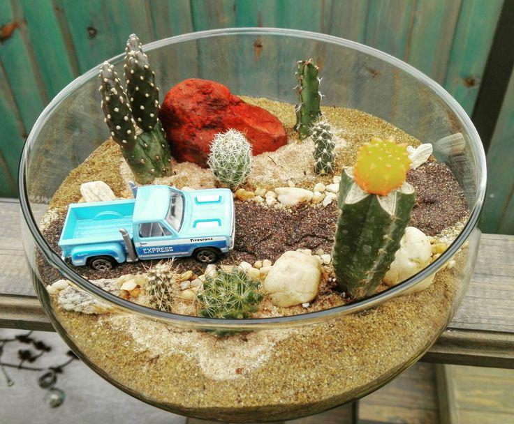 Terrario con cactus y autos  #terrarium #cactii #cactus #auto #camioneta #azul