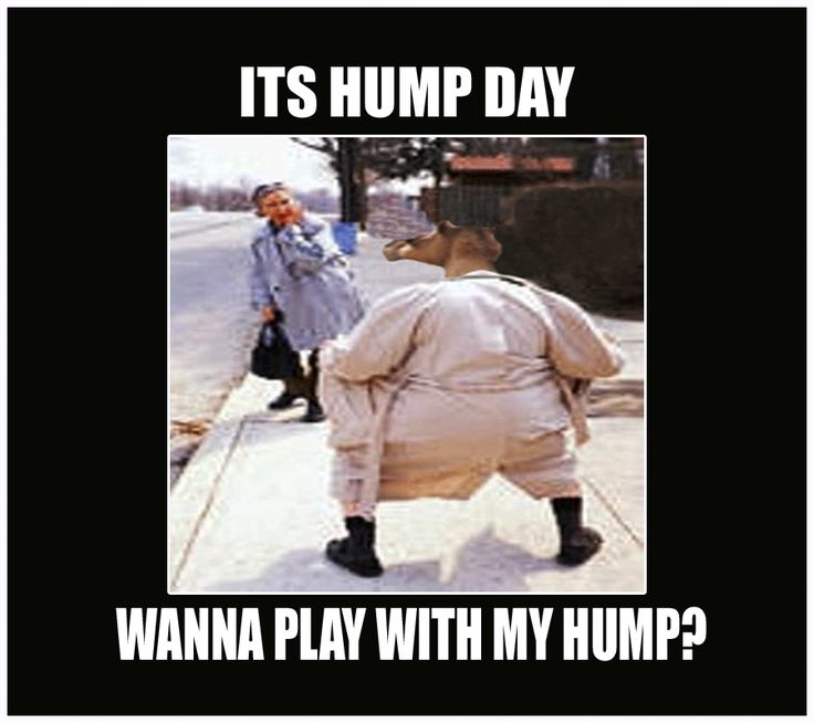 Wanna Play With My Hump? Funny Hump Day Meme | Desktop Backgrounds
