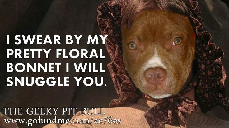 The Geeky Pit Bull I swear by my pretty floral bonnet... #Firefly #Mal #Pitbulls #FloralBonnet