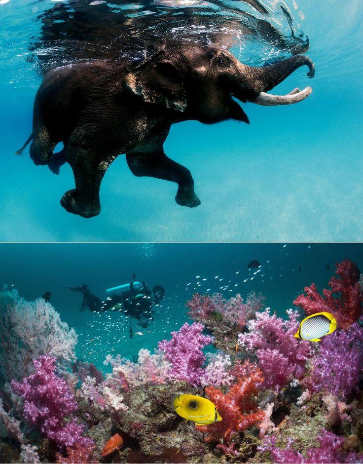 Andaman Tour Package #andamantourpackage #andamantourpackage6n7d #andamantourism http://allindiatourpackages.in/andaman-tour-package-6n7d/