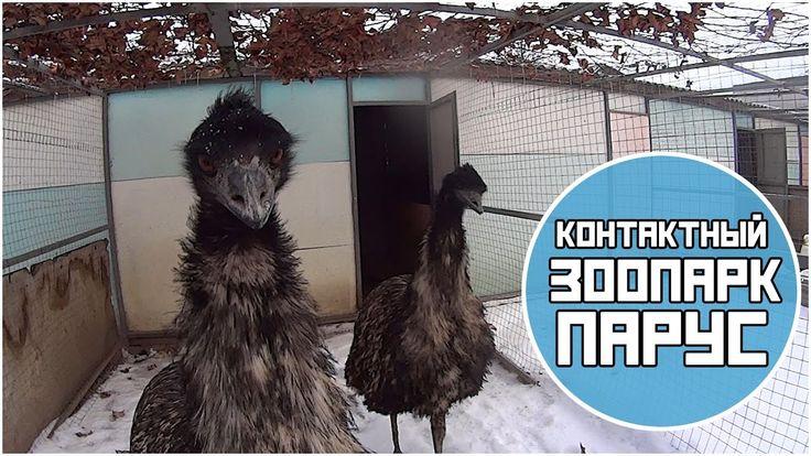"""VLOG Волгоградский контактный зоопарк в ЦСО """"Парус"""". Нам понравилось!"""