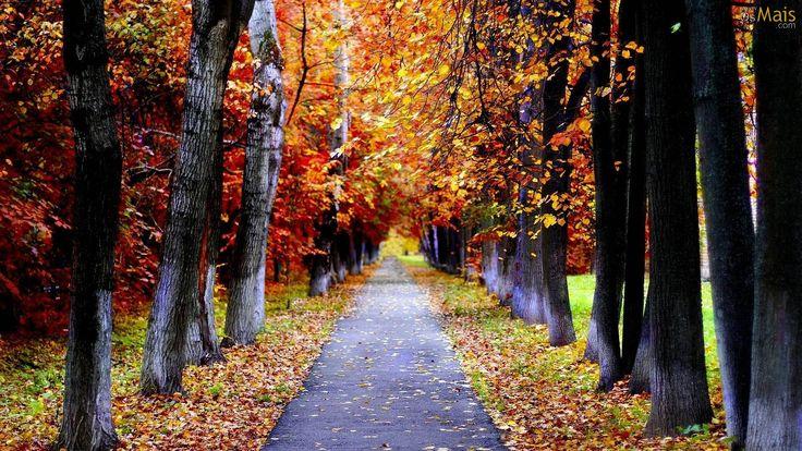 cores do outono 4