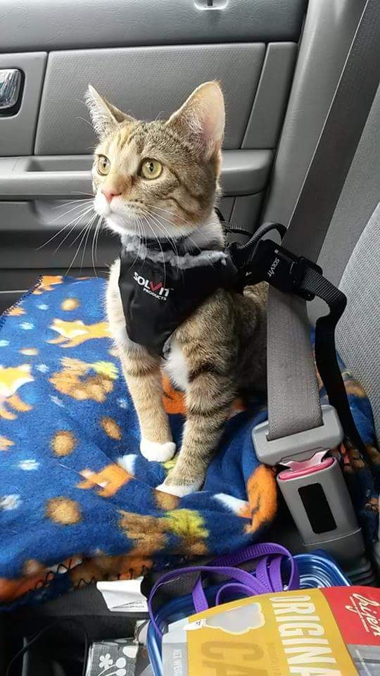 Travelling In Car With Cat Long Distance