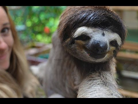 The Sloth Sanctuary Costa Rica – Up Close With The Most Amazing Creatures – They Get Around