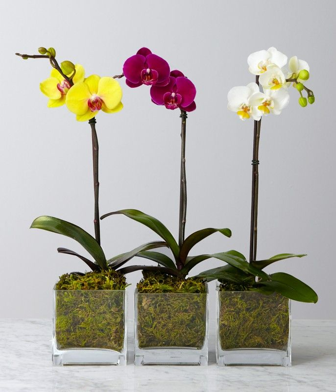 orchids in pots - Google Search.  my favorite plant!!!