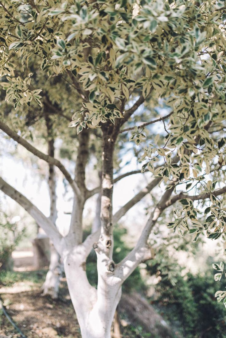 trees in chania, gardens of crete