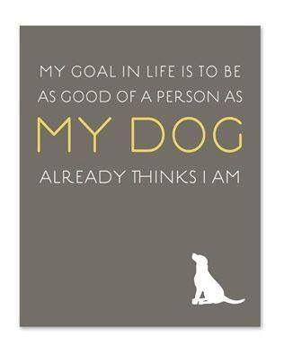 Hunde, Buchumschlag