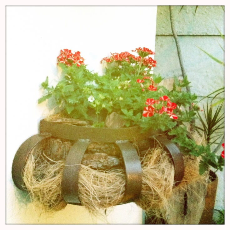 Some lovely red flowers that I don't know the name of. The Metal basket the are in also came from Clarence in the Free State.