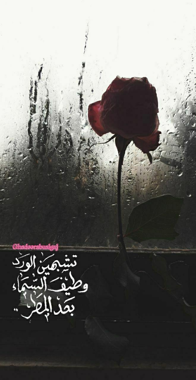 تشبهين الورد وطيف السماء بعد المطر Red Roses Photo Art Art
