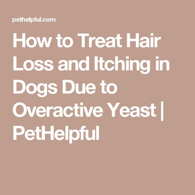 How to Treat Hair Loss and Itching in Dogs Due to Overactive Yeast | PetHelpful