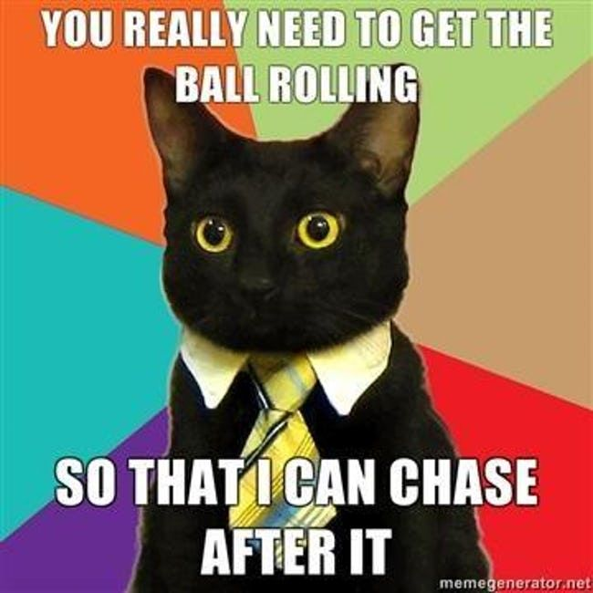 The Absolute Best of the Business Cat Meme | 🍀ViraLuck #humor