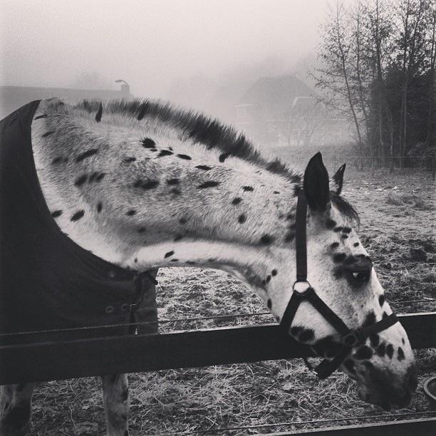 Pipi Langstrump's horse