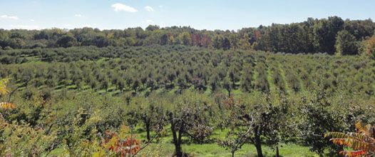 Fonthill, Ontario--lots of small farms; highest elevation in the region, where you can see both Great Lakes