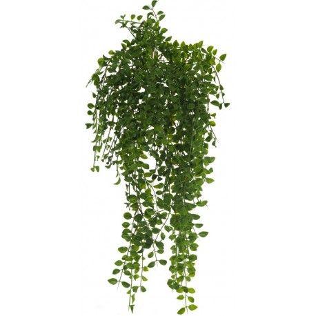 Mejores 20 im genes de la elegancia de las plantas colgantes en pinterest plantas colgantes - Plantas colgantes ...