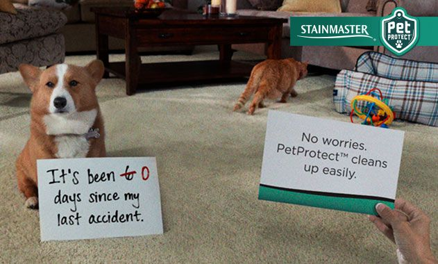 STAINMASTER PetProtect carpet and cushion system ...