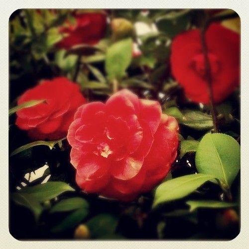 Primavera odorata, inspiri e tenti/questo gelido cor -  http://instagram.com/p/lzZ2ZXOPo1/ - #Semprecaromifu - #scritturebrevi - @Futura Festival Civitanova Marche