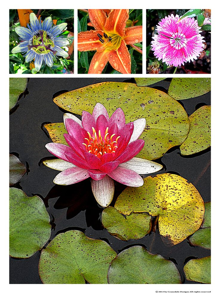 """""""Lily Pond""""   18 x 24 printed on fine art archival paper."""