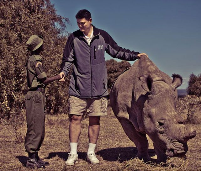 Yao Ming befriends a rhino while on a two week tour of Africa as a global ambassador for WildAid, one of the leading organizations working to reduce the demand for illegal wildlife products. (Courtesy of WildAid.org)  GALLERY: Yao Ming Since Retirement| Classic Yao Photos: Week Tour, Top 10, Global Ambassador, Ming Befriends, Organizations Working, Endangered Animals List, Leading Organizations, Classic Yao, Illegal Wildlife