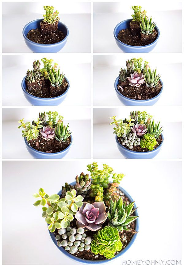 Skip the dying flowers and repot a mini bowl full of succulents.