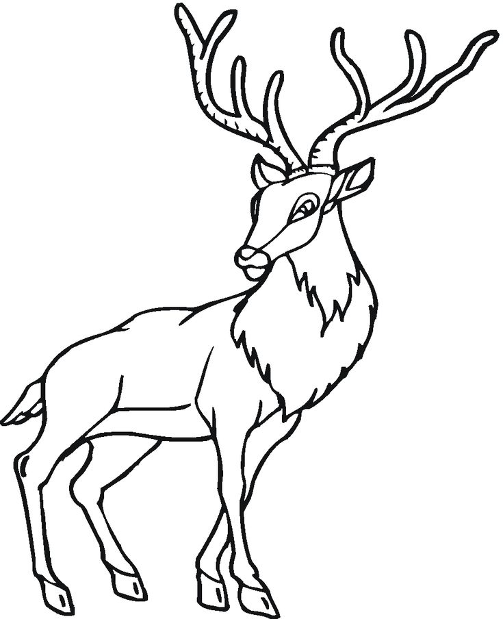 8 Best Antelope Coloring Pages Images On Pinterest