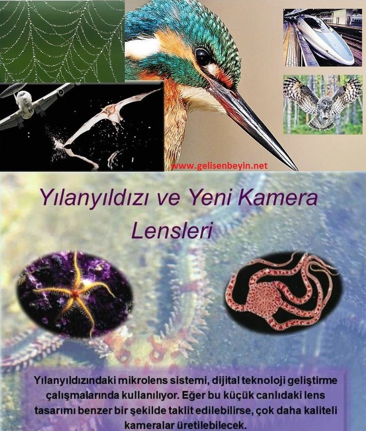 Biyotaklit (Biyomimetrik,Biomimicry)