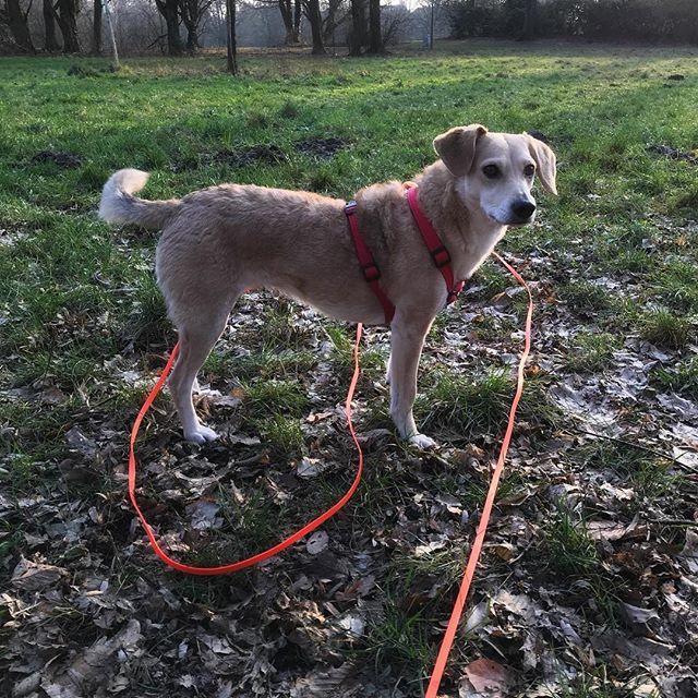 Wir Wunschen Euch Einen Schonen Sonntagendlich Scheint In Hamburg Mal Wieder Die Sonne Perfekt Fur Eine Kleine Trainingseinhe Hundetraining Hunde Hunde Bilder