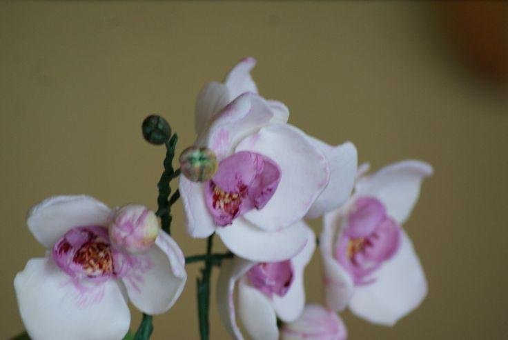 Tort orchidea