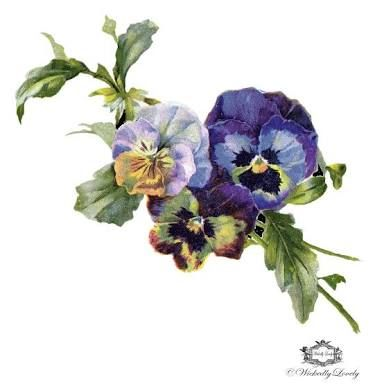 pansies tattoos - Google Search