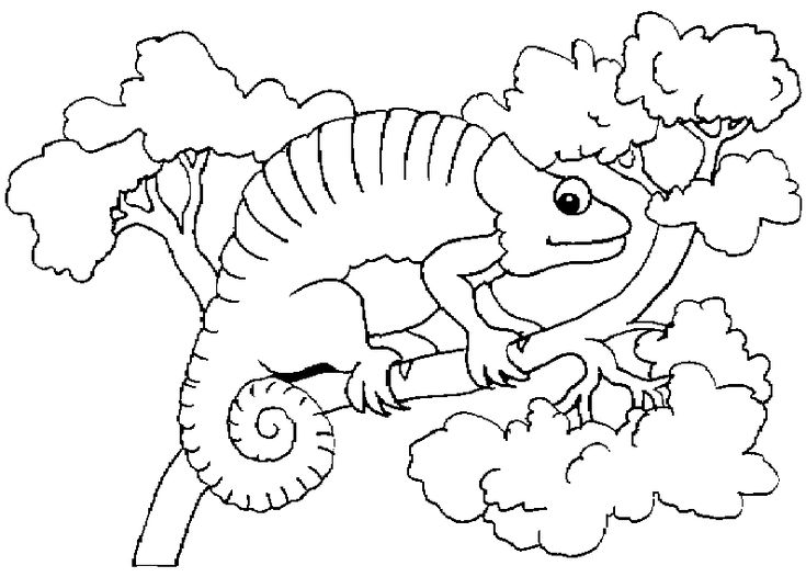 4122 best coloring 2 images on pinterest | coloring books, adult ... - Chameleon Coloring Pages Printable