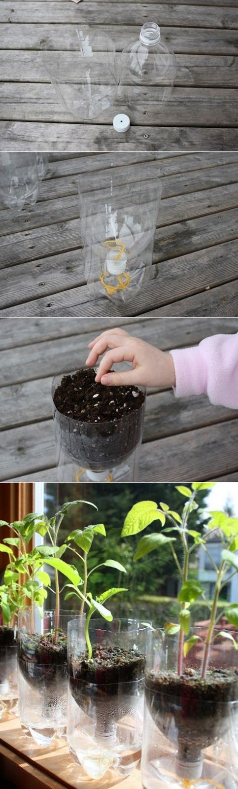 re-used/upcycle plastic bottles---Self Watering Containers by Alternative Energy and Gardening. Great tip!