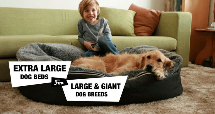 best 25 large dog beds ideas on pinterest large dog bed. Black Bedroom Furniture Sets. Home Design Ideas